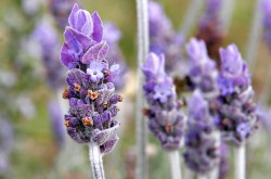 Doolin Aromatherapy & Massage