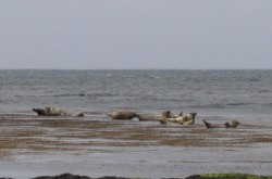 seals on aran islands